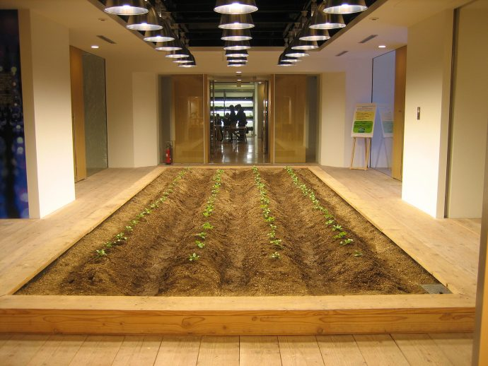 The start of the growing cycle - seedlings push through the earth of a planter bed on the building's main entrance level. Photo courtesy Pasona.