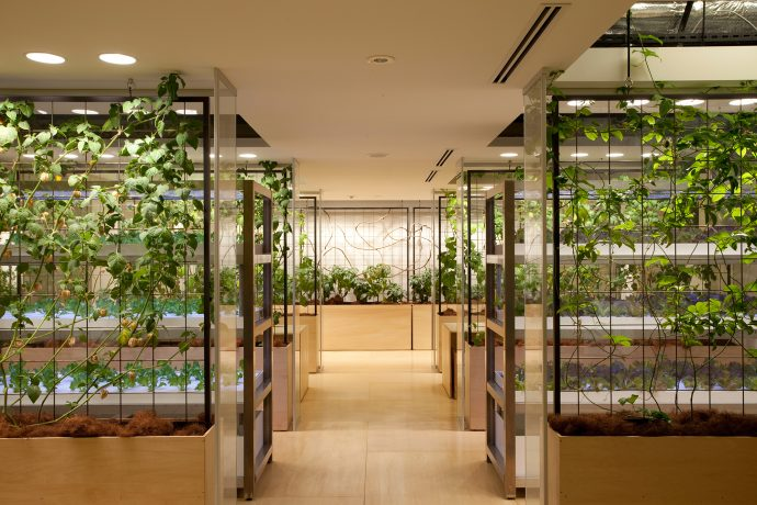Lemon and passion fruit tree partitions divide each meeting booth. Photo by Luca Vignelli.