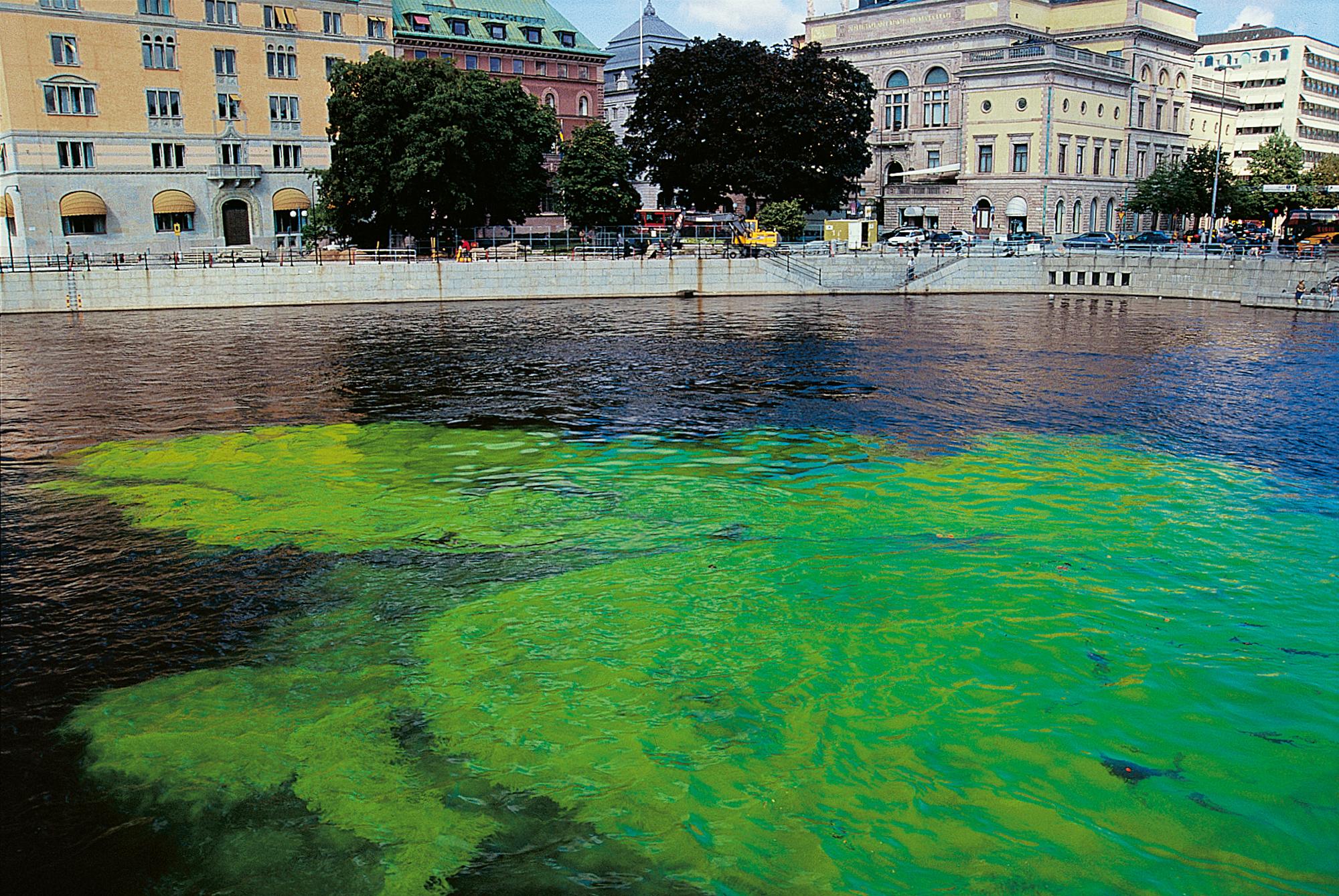 Green_river_101967