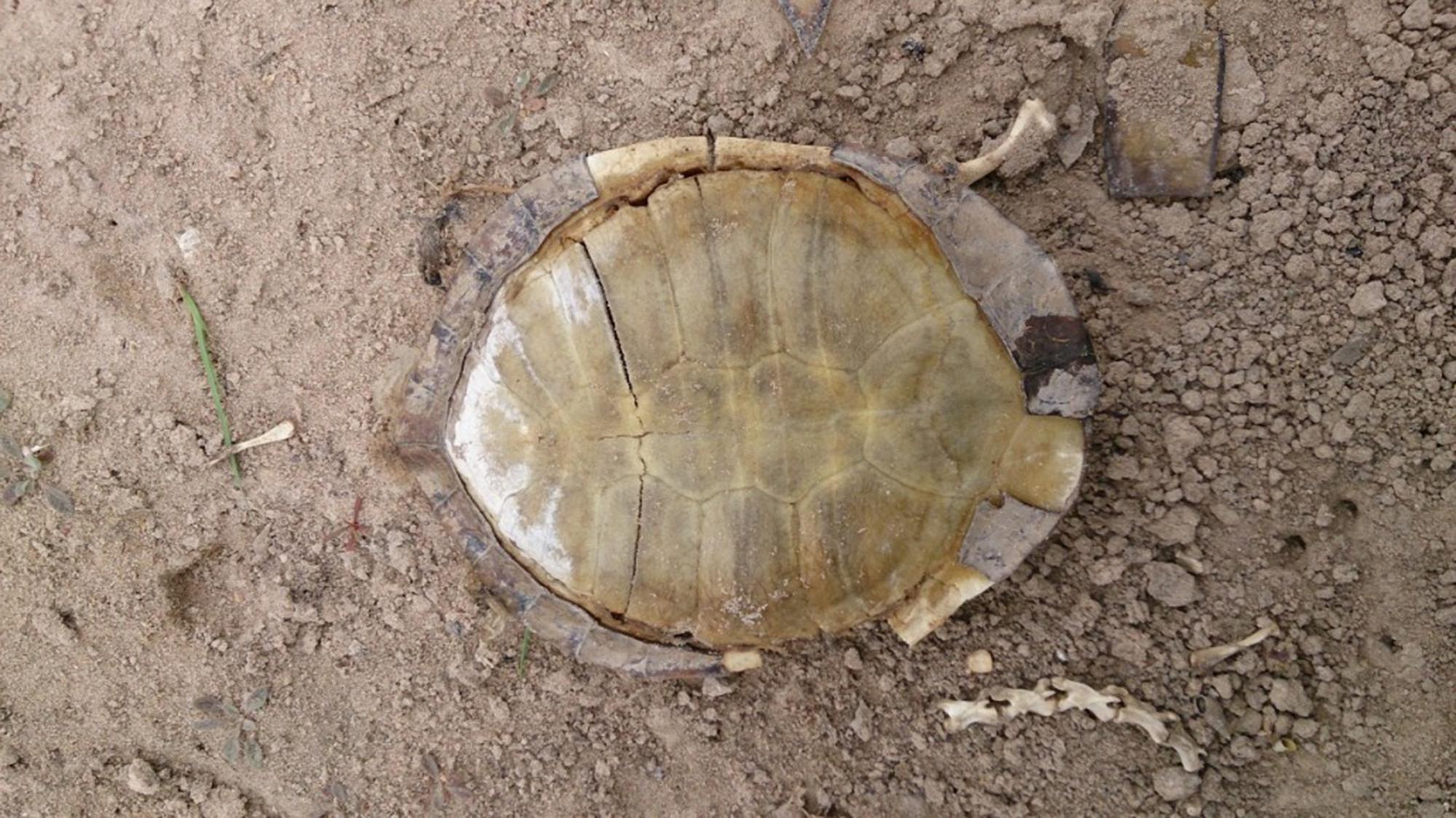 Shell-Bygana-Lagoon-2000x1124